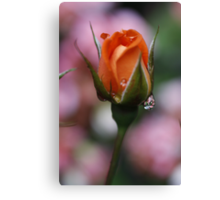 Monica Rose Canvas Print