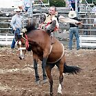Hard at It - Ross Rodeo, Tasmania 2009 by PaulWJewell