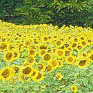 A Field of Sun  by RebeccaWeston