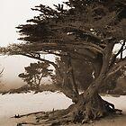 Cypress in the Fog by CherylBee