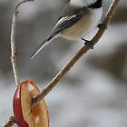 Chickadee Apple by Alyce Taylor