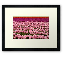 The Beauty of Tulips Framed Print