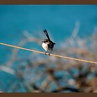 Bird on a wire by Missy777