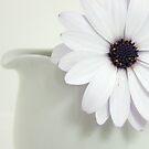 Daisy in a Milk Jug by Penelope Thomas