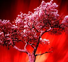 Flame Tree by Nichole Lea