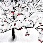 The Orchard in Winter by Mikeinbc1