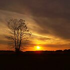 Sunset at the Dog Park by debbiedoda