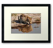 Leopard Reflection 2 - Okavango Delta, Botswana Framed Print