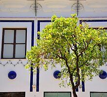 Windows at JEREZ de la FRONTERA - Andalusia -  by Daniela Cifarelli