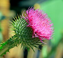 THISTLE by Rexcharles