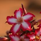 Impala lily by Lauren Banks