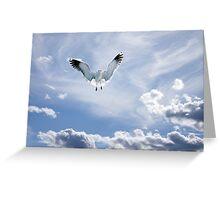 Baltic Bird Greeting Card