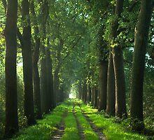 Oaks Lane  by steppeland