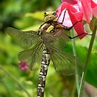 Dragonfly On Sweet Pea by gillyenigmatic