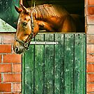 In the stable by PhotoAmbiance