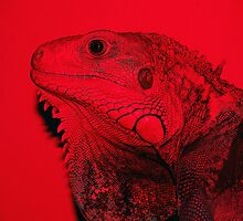 Iguana in Red by Lisa Brower