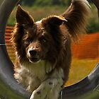 Going through the hoops... by IanJohnston