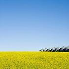 Alberta Canola Field by Marlene Hielema