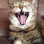 My cat yawning by Kirsty Smith