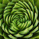 Cactus by KatRB