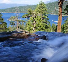Into Lake Tahoe by Barbara  Brown