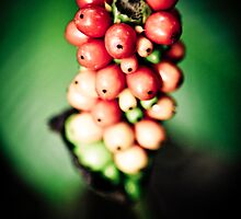 Jungle Berry Green by Chinua Ford
