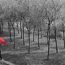 umbrella 44 by marcwellman2000