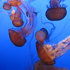 Jellyfish by MindyLinford