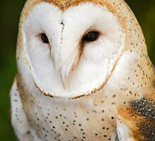Barn Owl by Bryan Peterson