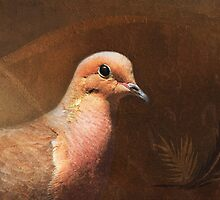 Portrait of a Dove by Renee Dawson