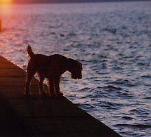 Alki Beach Dog by tmtphotography