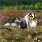 Rough Collie Blue Merle  by Lucy Marsella
