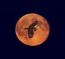 Moon Lighting by Martin Smart