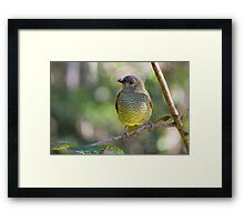 Bower Framed Print