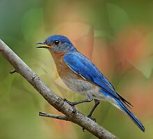 Bluebird Symphony by Bonnie T.  Barry
