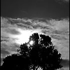 silhouette by David Gallagher