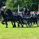 Friesian Horses in Action by ienemien