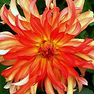 Dahlia Sunshine by ienemien