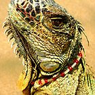 Fancy Iguana by MaluC