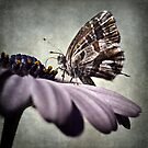 The little butterfly by Barbara  Corvino