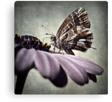 The little butterfly Canvas Print