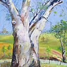 Gum Tree Hancocks Lookout by Virginia McGowan