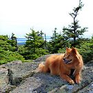 'Cindy on Mt. Cadillac' by Scott Bricker