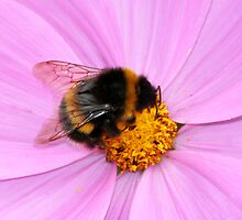 The Working Bumblebee by Wayne Gerard Trotman