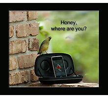 Honey, where are you? Photographic Print