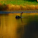 On Golden Pond by GailD