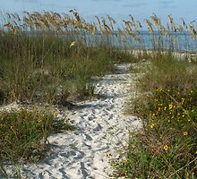 Path through the Dunes by kinz4photo