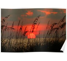 Seaoat Sunset Poster
