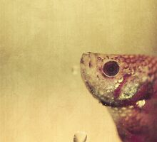 fish can be sad too by Aimelle
