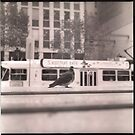 Melbourne Pigeon by aditmawar